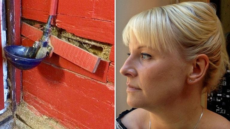 Till vänster en fallfärdig ridskola, till höger Anna Tenje