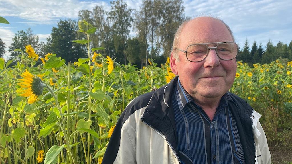 Rune Gustavsson står framför sitt solrosfält