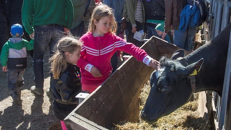 Två tjejer står och klappar en ko på huvudet. I bakgrunden massa folk.