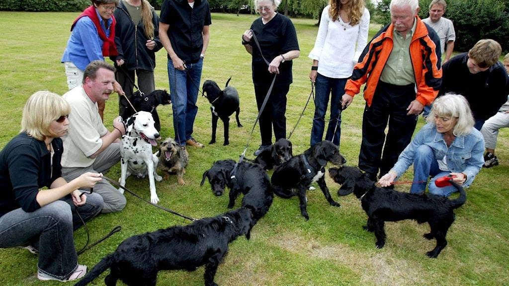 hundar blandras tax och dalmatiner