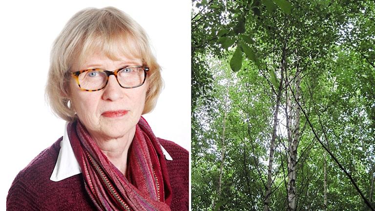 Montage. Till vänster Marita Bengtsson. Till höger björkskog.