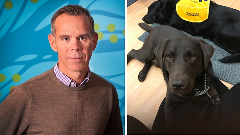Diskrimineringsombudsman Clas Lundstedt och Jenny Wikstens hund Vegas som tittar in i kameran. Montage.