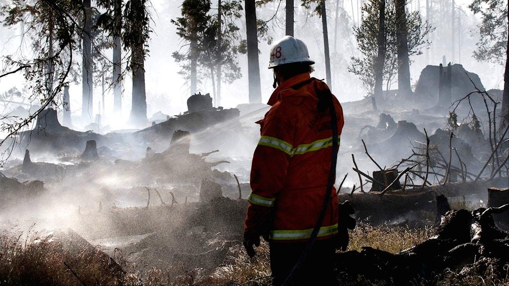 En brandman släcker en skogsbrand