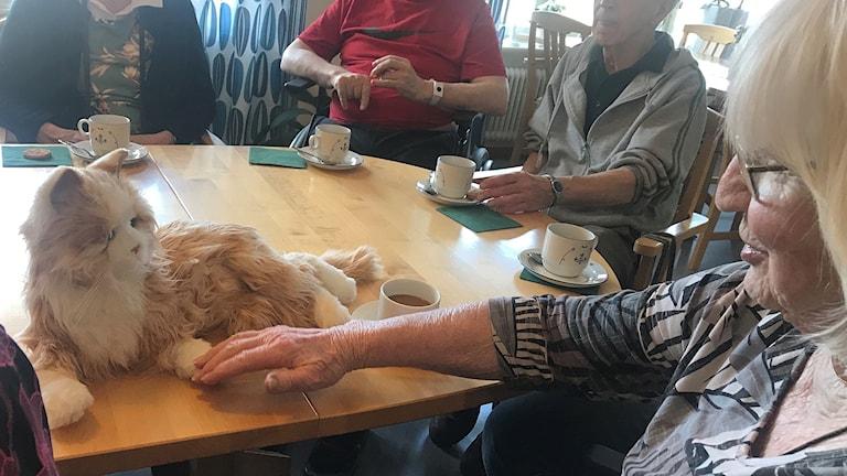 Äldre med kaffekoppar och en katt på bordet