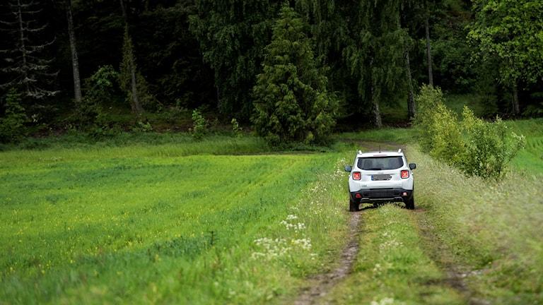 En Jeep kör på en skogsväg.