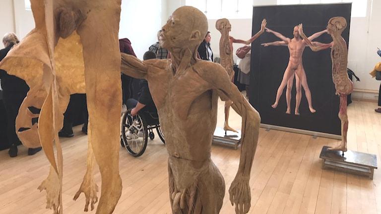 Döda människokroppar visades på utställning i Växjö.
