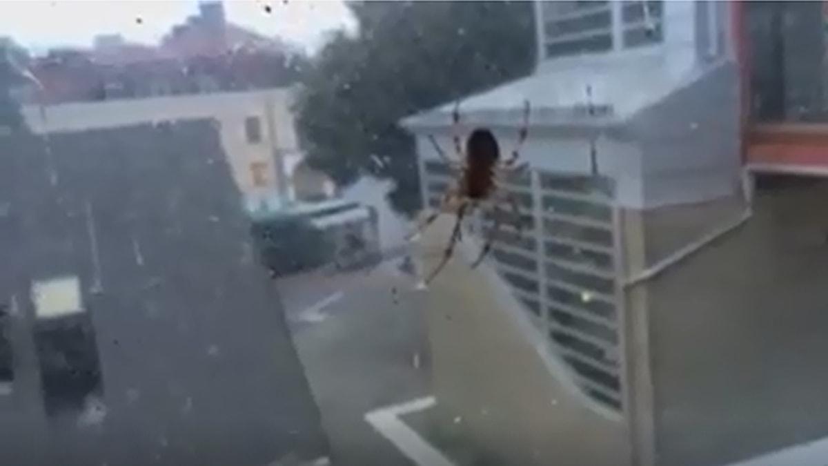 Spindel på Alvesta station