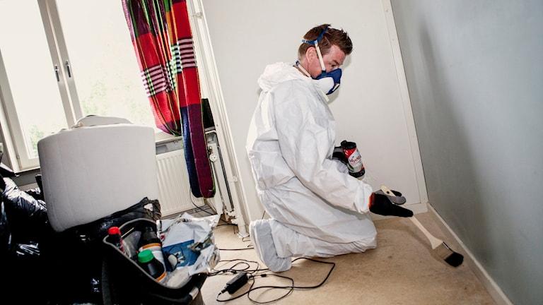 En person sanerar en lägenhet från vägglöss