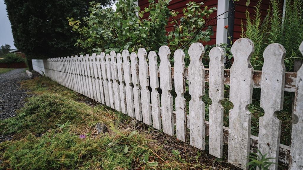 Ett staket till en trädgård.