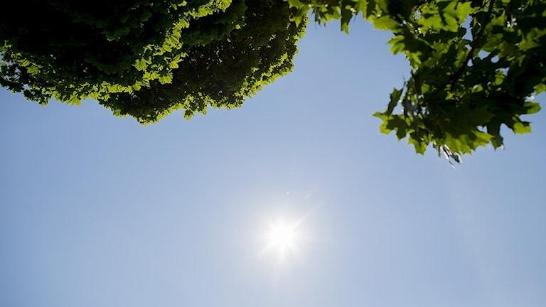 soligt och blå himmel