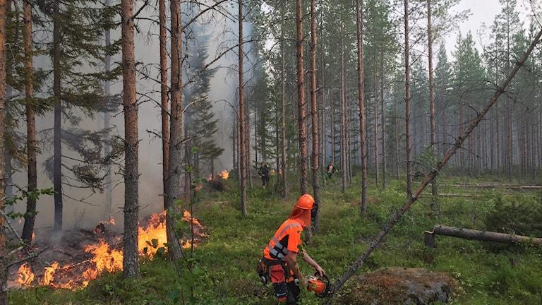 Branden i Olofsfors omfattade omkring två hektar.