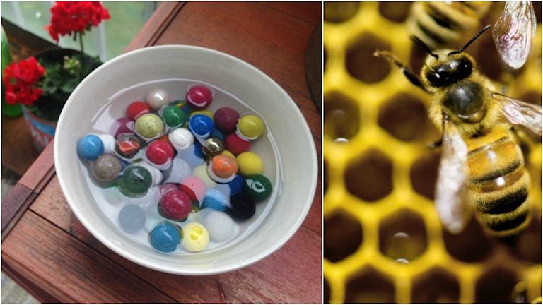 En skål med kulor och vatten samt ett bi