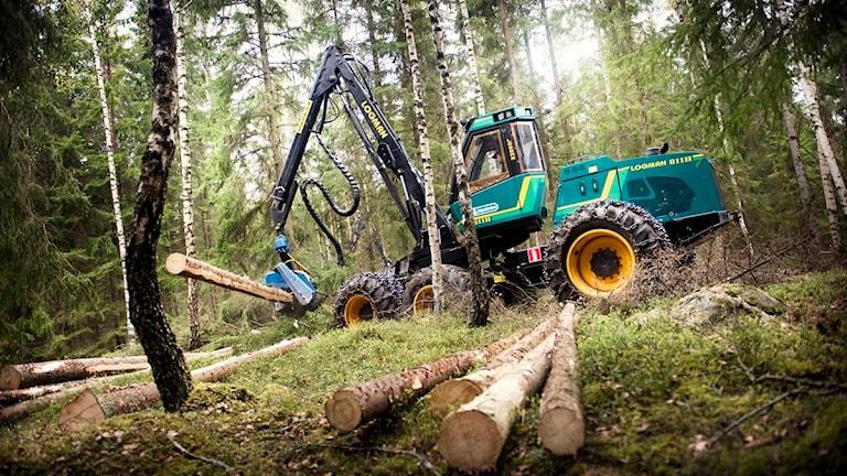 Skogsavverkning, Foto: David Magnusson/Scanpix.
