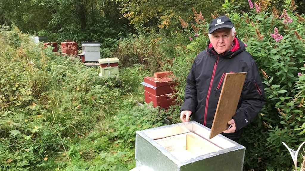 Åke Jonsson, biodlare i Tavelsjö, bredvid sina bikupor
