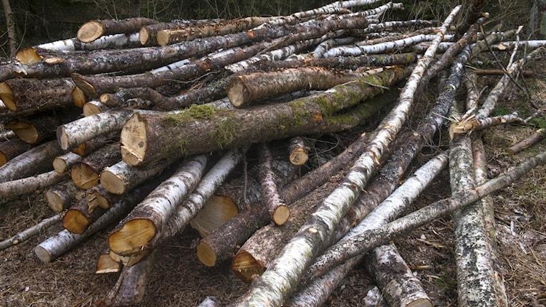 Fällda träd i en hög.