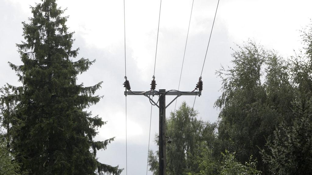 Kraftledningsgata i skogen. Foto: Bertil Ericson/TT