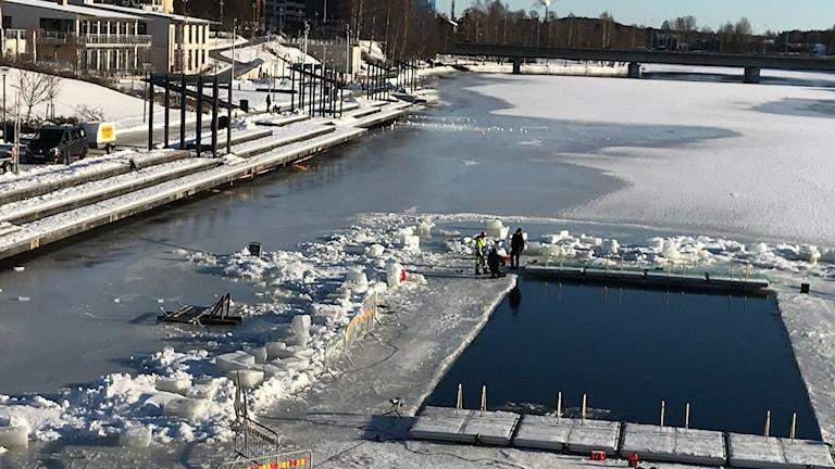 Isvak till världscuptävlingen i vintersim