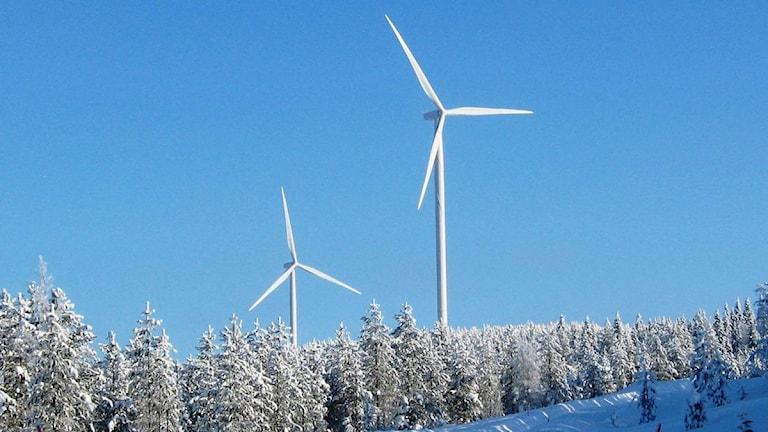 Vindkraftverk i Springliden utanför Malå, Foto: Magnus Bergner/SR.