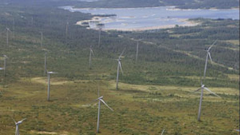 Blaiken vindkraftspark. Foto: Skellefteå Kraft.