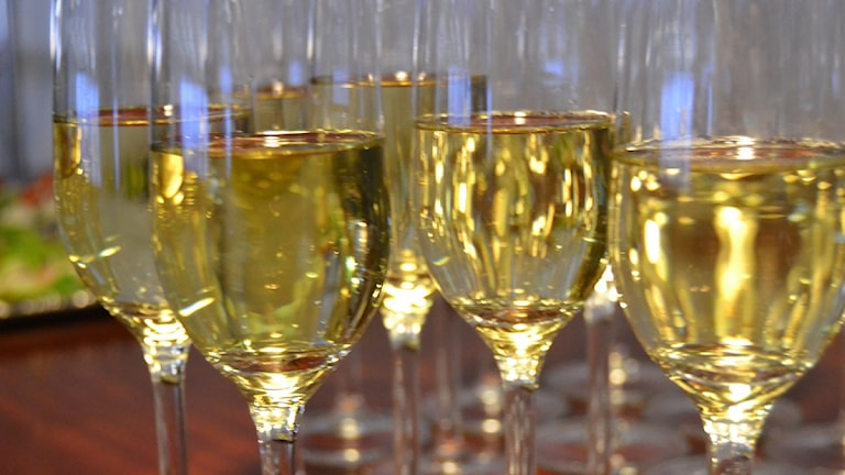 Premiärturen firades med bubbel. Foto: Åsa Sundman/SR.