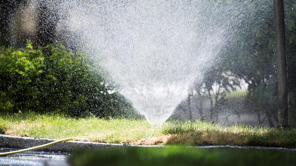 En vattenspridare vattnar en villaträdgård.