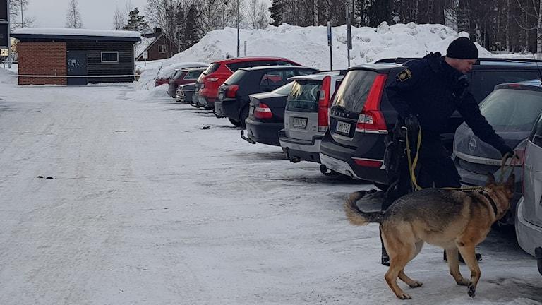 polishund, ålidhem