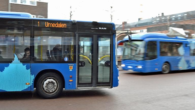 Bussar på gamla Vasaplan i Umeå. Foto: Peter Öberg, Sveriges Radio.