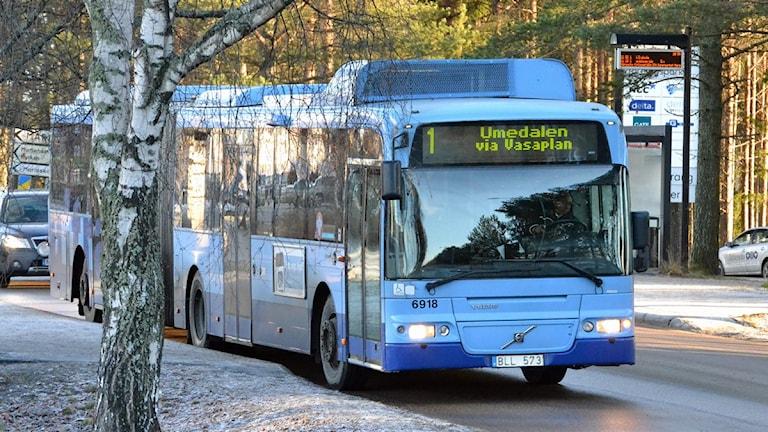 Lokalbuss på Mariehemsvägen i Umeå. Foto: Peter Öberg, Sveriges Radio.