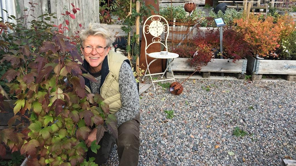Trädgårdsmästare Kickan Ahlström bakom ett blodolvon.