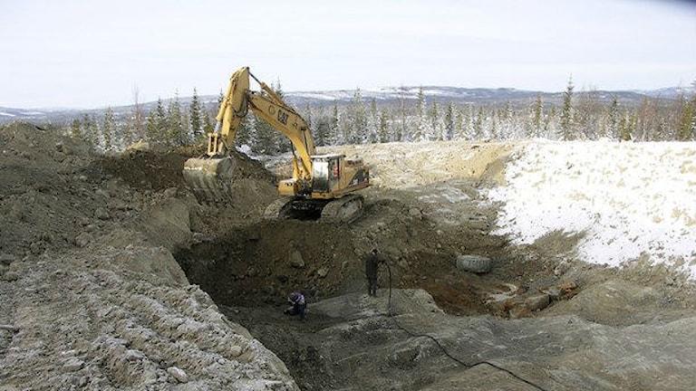 Provborrning i Fäboliden. Foto: Lappland Goldminers/ARKIV.