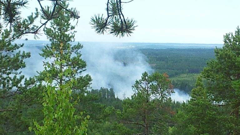 Skogsbrand i Skellefteå 2014. Foto: Åza Meijer/Sveriges Radio