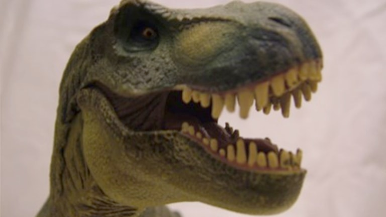 Dinosaurie, T-rex. Foto: Erica Dahlgren/Sveriges Radio