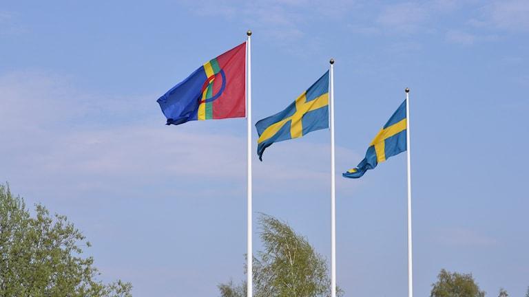 Samiska flaggan och svenska flaggor mot blå himmel. Foto: Lillemor Strömberg/Sveriges Radio.