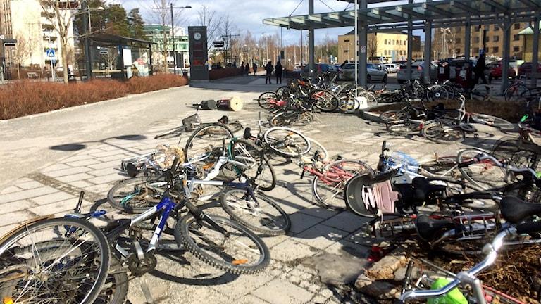 Omkullblåsta cyklar vid NUS i Umeå. Foto: Peter Öberg, Sveriges Radio.