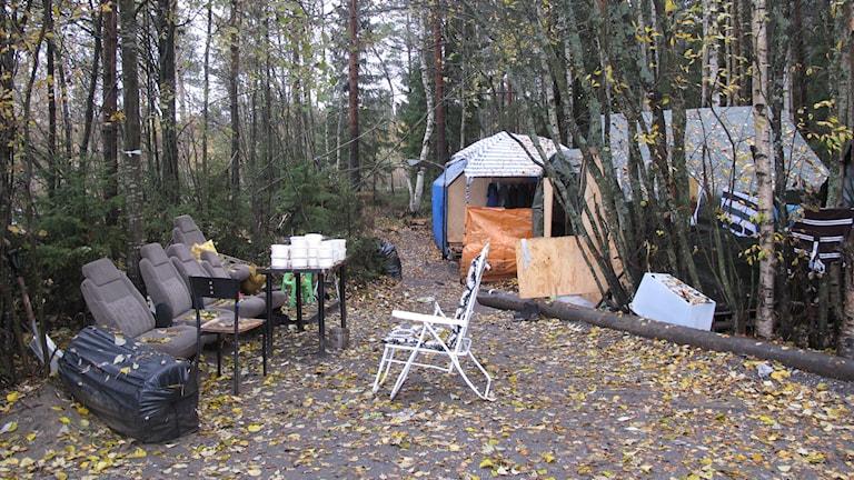 Här planerar tiggarna att tillbringa vintern. Foto: Anna Burén/SR