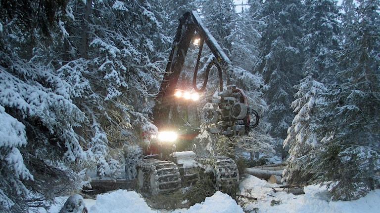 Skogsmaskin i arbete