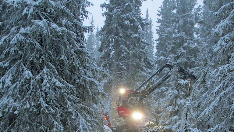 Skogsmaskin som arbetar med hyggesfritt skogsbruk.