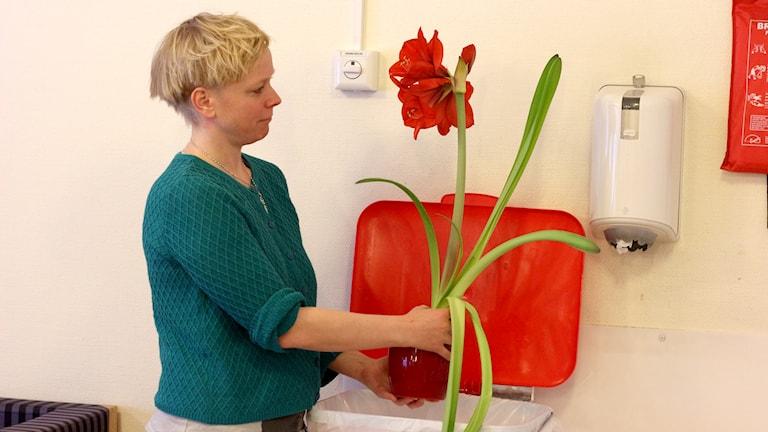 Anna Burén med en julblomma. Foto: Helena Ramfjord/Sveriges Radio