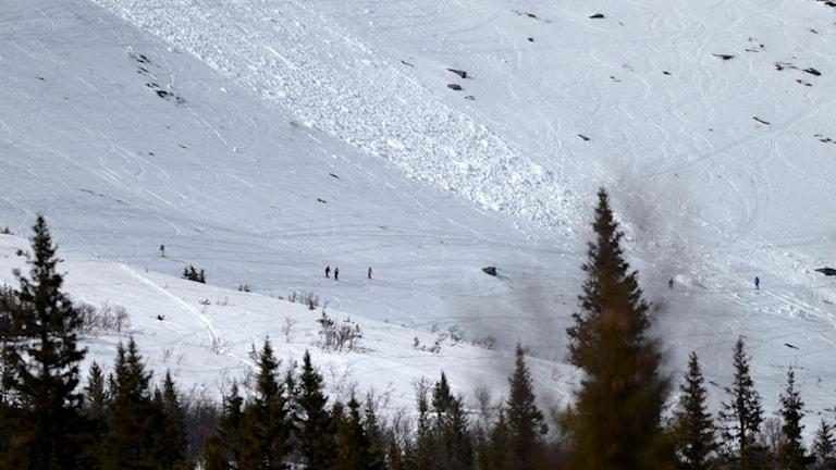 Lawine, Ski