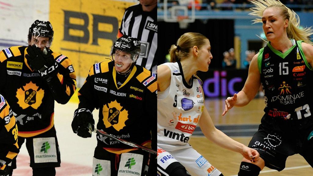 Skellefteå AIK och Udominate. Foto: Magnus Bergner/Sveriges Radio och  Alf Lindbergh/Pressbilder