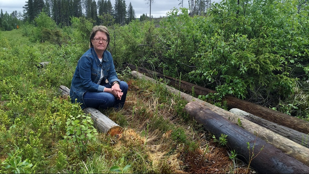 Eva Henriksson från Rotsjön är upprörd över att Telia lämnar gamla telefonstolpar i naturen   Foto Magnus Bergner / SR