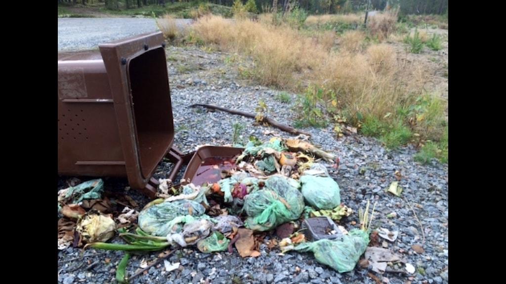 Björn välte soptunna i Boviken