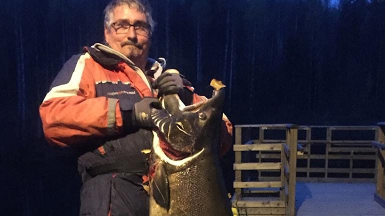 Ulf Hedlund i Skelleftehamn fångade monsterlax. Foto: Privat