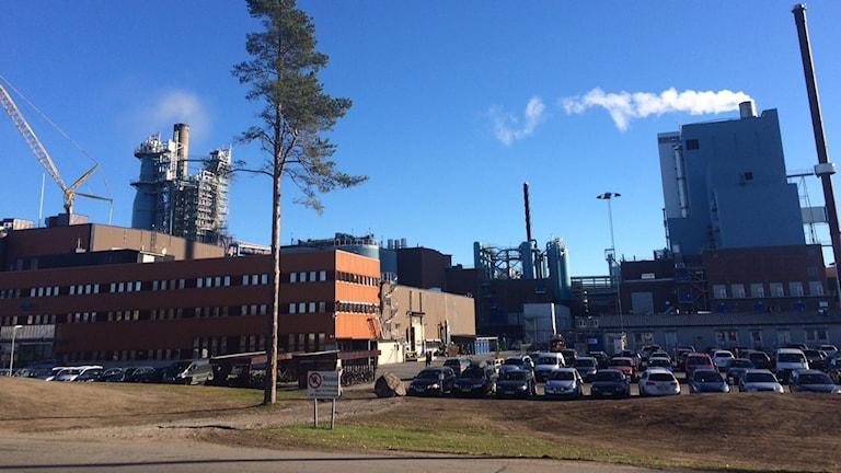 SCA i Obbola. Foto: Anders Wikström/Sveriges Radio