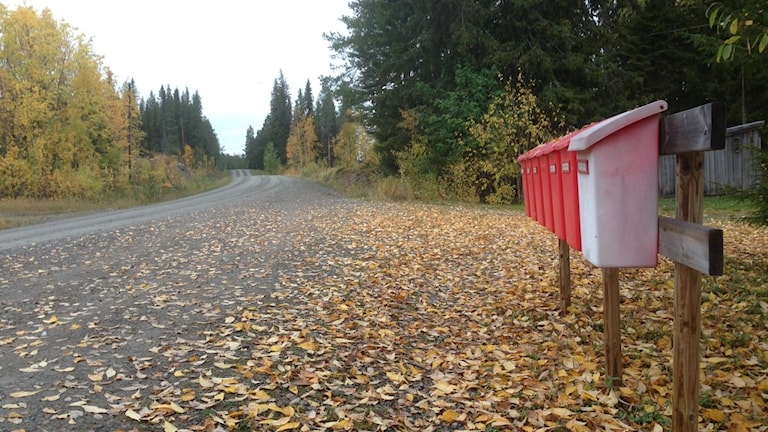 Postlådesamling utanför Sorsele. Foto:Erica Dahlgren/Sveriges Radio