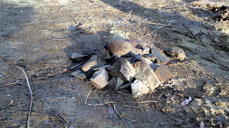Stenar hittades vid stenåldersboplats utanför Drängsmark     foto Magnus Bergner / SR