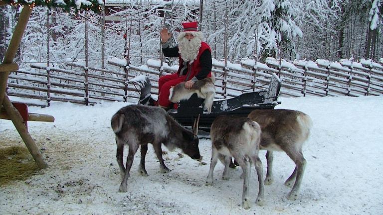 Tomte med renar. Foto Irene Sjögren.
