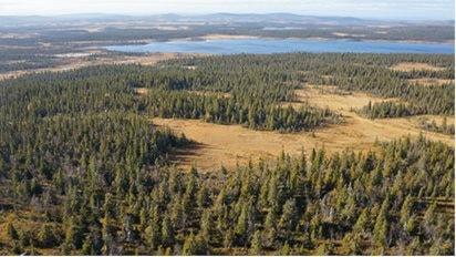 Stöttingfjället utgörs av en i det närmaste väglös vildmark med urskogsartade skogar och vidsträckta våtmarker. Foto: Länsstyrelsen