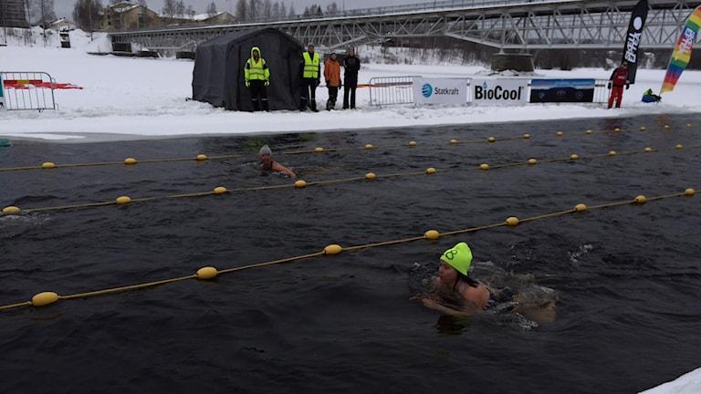 Världscupen och Skandinaviska mästerskapen i Vintersim pågår i helgen i Skellefteå. Foto Örjan Holmberg/SR.