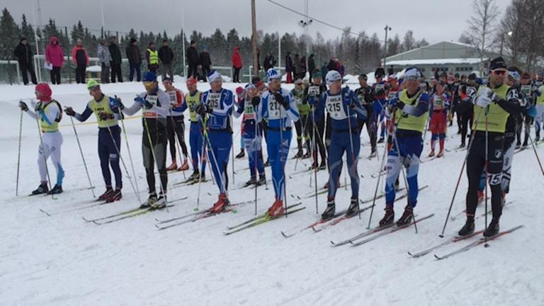 Starten i Vindeln av 2016 års upplaga av Sjumila. Foto Stefan Bygdesson.
